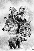 Wolves Drawings - The Wildlife Collection 1 by Andrew Read