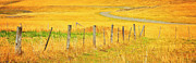 Ranchland Framed Prints - The Winding Road The Crooked Fence And The Bluebird Framed Print by Theresa Tahara