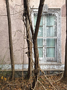 Peeling Stucco Posters - The Window For The Trees Poster by David Stone