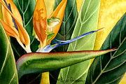Bird Of Paradise Paintings - The Windsurfer by Lyse Anthony