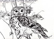 Wildlife Prints Drawings Framed Prints - The Wise Owl Framed Print by Celia Fedak