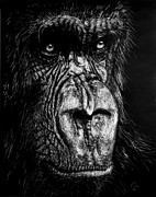 Ape Originals - The Wise Simian by Nathan Cole