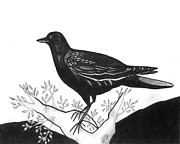 Blackbird Drawings Metal Prints - The Witness Metal Print by Helena Tiainen