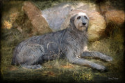 Irish Digital Art Acrylic Prints - The Wolfhound  Acrylic Print by Fran J Scott