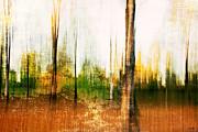 Scott Pellegrin - The Woodlot