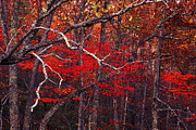 Colors Of Autumn Prints - The woods aflame in red Print by Paul W Faust -  Impressions of Light
