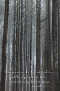  Tall Trees Prints - The Woods Print by Bill  Wakeley