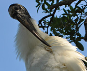 Lydia Holly - The Woodstork 2