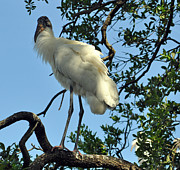 Lydia Holly - The Woodstork