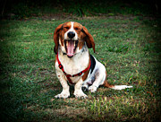 Dog Pics Photos - The Yawn by John Rizzuto
