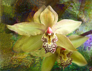 Quebec Mixed Media - The Yellow Orchid by Julika Winkler