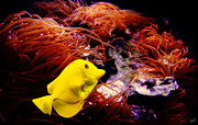 Aquariums Photos - The Yellow Queen by Nishanth Gopinathan