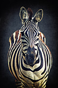 Striped Mixed Media Prints - The Zebra Print by Angela Doelling AD DESIGN Photo and PhotoArt