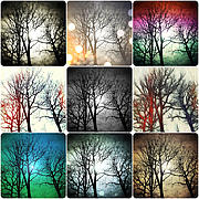 Winter Trees Digital Art Metal Prints - Theme with Variation Metal Print by Natasha Marco