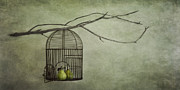 Birdcage Prints - There is a world outside Print by Priska Wettstein