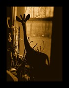 Photography Framed Prints - There S A Giraffe In My Window Framed Print by Mimulux patricia no