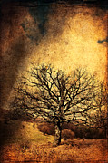 Adventure Mixed Media Posters - There Was Once a Tree Poster by Roman Solar