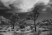 Joshua Tree National Park Framed Prints - There Will Be a Way Framed Print by Laurie Search