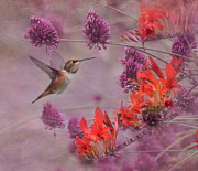 Rufous Hummingbird Posters - Theres Purple in My Crocosmia Poster by Angie Vogel