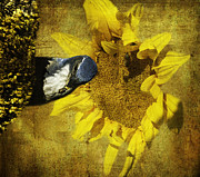 These Sunflower Seeds Are All Mine Print by Diane Schuster
