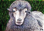 Sheep Originals - They are b-a-a-h-k by Elizabeth Clausen