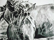 Tennessee Walker Drawings - Things were Sweeter in Tennessee by Shaila Yovan Tenorio