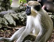 Jennifer Lamanca Kaufman - Thinking Green Monkey