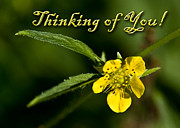 Jeanette K - Thinking of You Buttercup