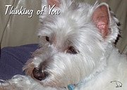 Westie Pup Framed Prints - Thinking of You Framed Print by Dianne Wendell