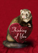 Jeanette K - Thinking of You Ferret