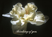 Harold E McCray - Thinking of you.