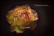 Kim Andelkovic - Thinking of you...