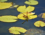 Nature Center Pond Prints - Thirsty Bee on Lily Pad Print by Allen Sheffield