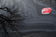 Asphalt Photos - Thirsty by Luke Moore