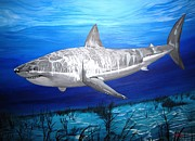White Shark Prints - This Is A Shark Print by Kevin F Heuman