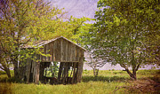 Landscaped Prints - This Old Barn Print by Joan Carroll