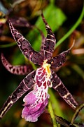 This Orchid Is A Star Print by Beth Akerman