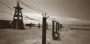 Barbed Wire Fences Prints - This Too Is America Print by Cheryl Hrudka