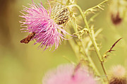 Thistle Photos - Thistle and Friend by Lois Bryan