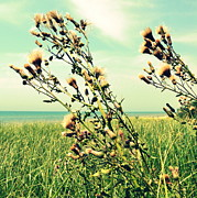 Thistle On The Beach  Print by Michelle Calkins