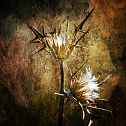 Passion Metal Prints - Thorns Metal Print by Stylianos Kleanthous