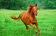 Jerry Irwin - Thoroughbred Filly