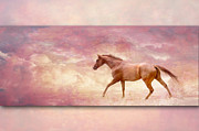 Pamela Hagedoorn - Thoroughbred Sunset