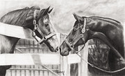 Father And Son Drawings - Thoroughbreds by Paul Treadway