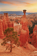 Thor Framed Prints - Thors Hammer in the Bryce Canyon Amphitheater Framed Print by Alan Vance Ley