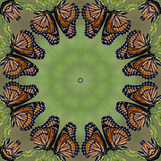 Kathy Clark - Those Amazing Monarchs...