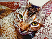 Cats Framed Prints - Those Eyes Framed Print by David G Paul