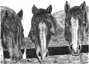 Horses Drawings Prints - Three Amigos Print by Glen Powell