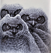 Original Owl Drawing Prints - Three Amigos Print by Rick Hansen