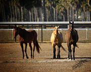 Horse Pyrography Prints - Three Amigos Print by Torrie Ann Needham